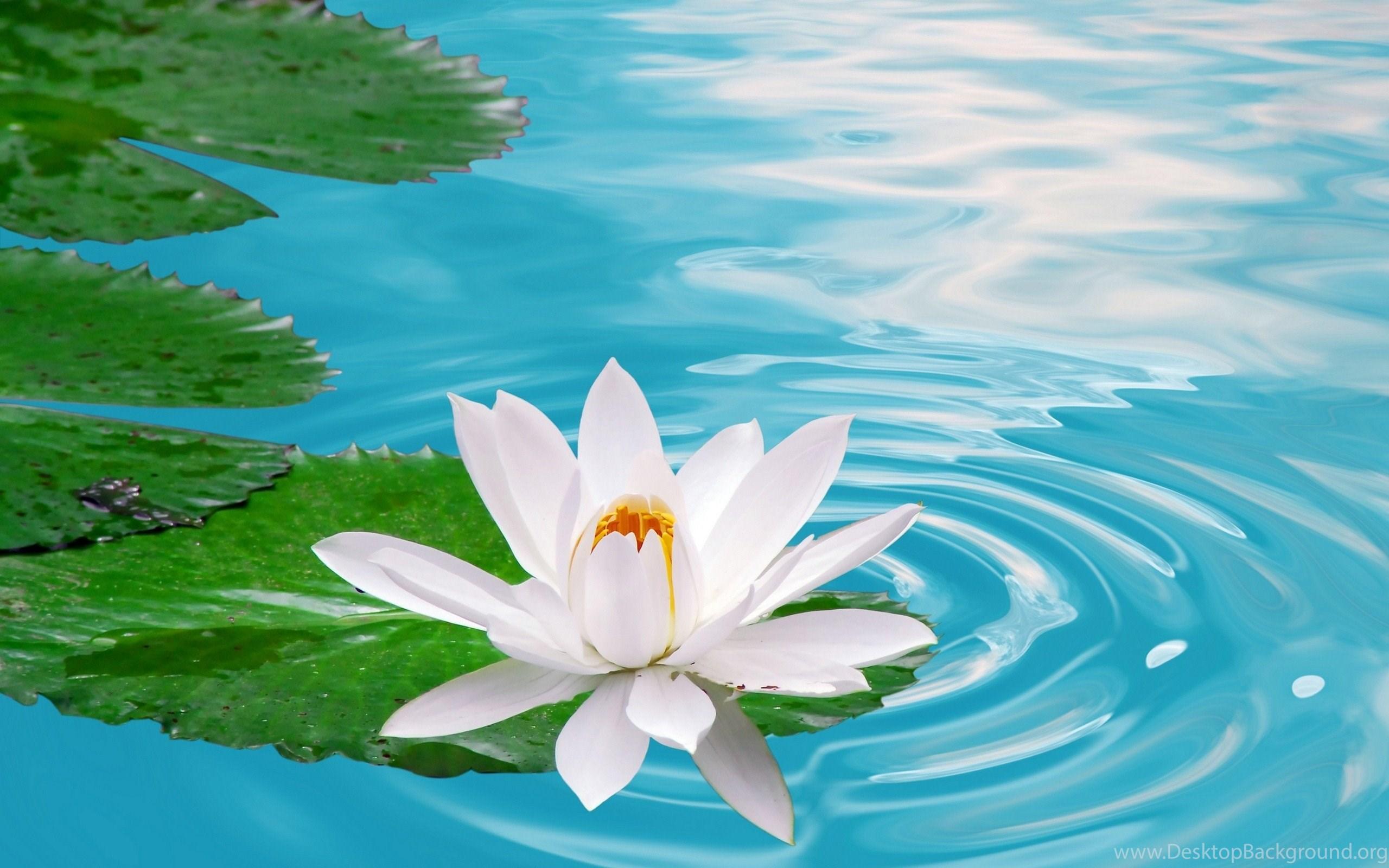 Nature Flowers Wallpapers Free Download HD Desktop