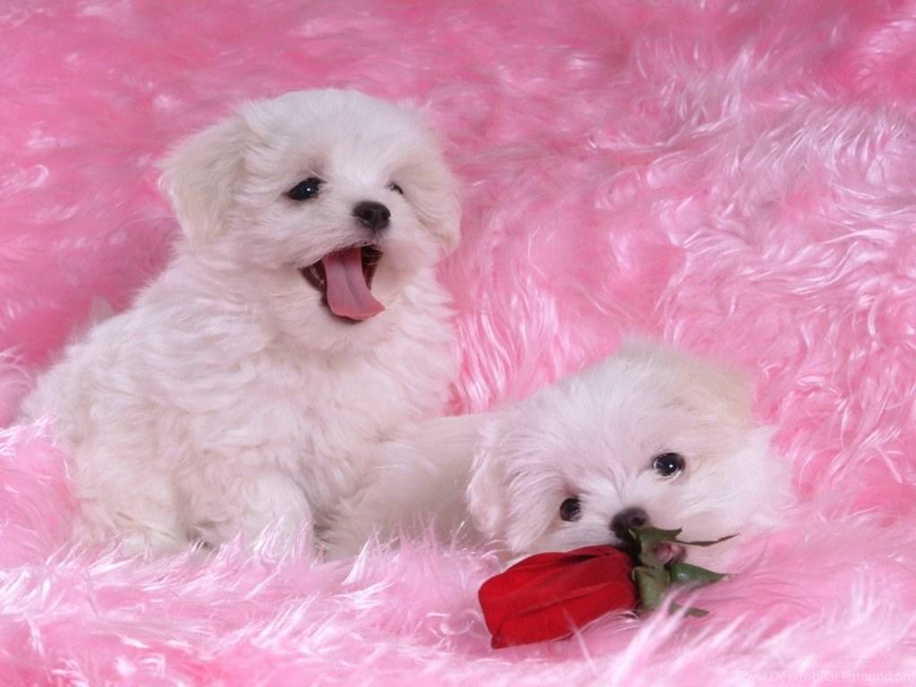 Cute Puppy Names 14 Hd Wallpapers Hivewallpaper Com Desktop Background