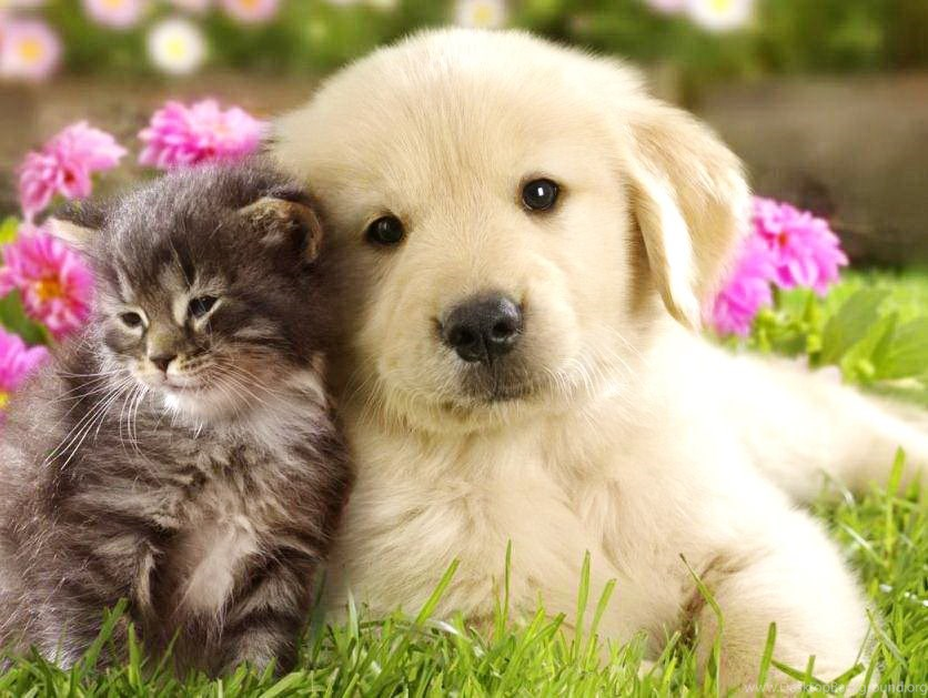 Cute Cat And Dog Wallpapers Very Cute Puppy Wallpapers Petpictures Desktop Background