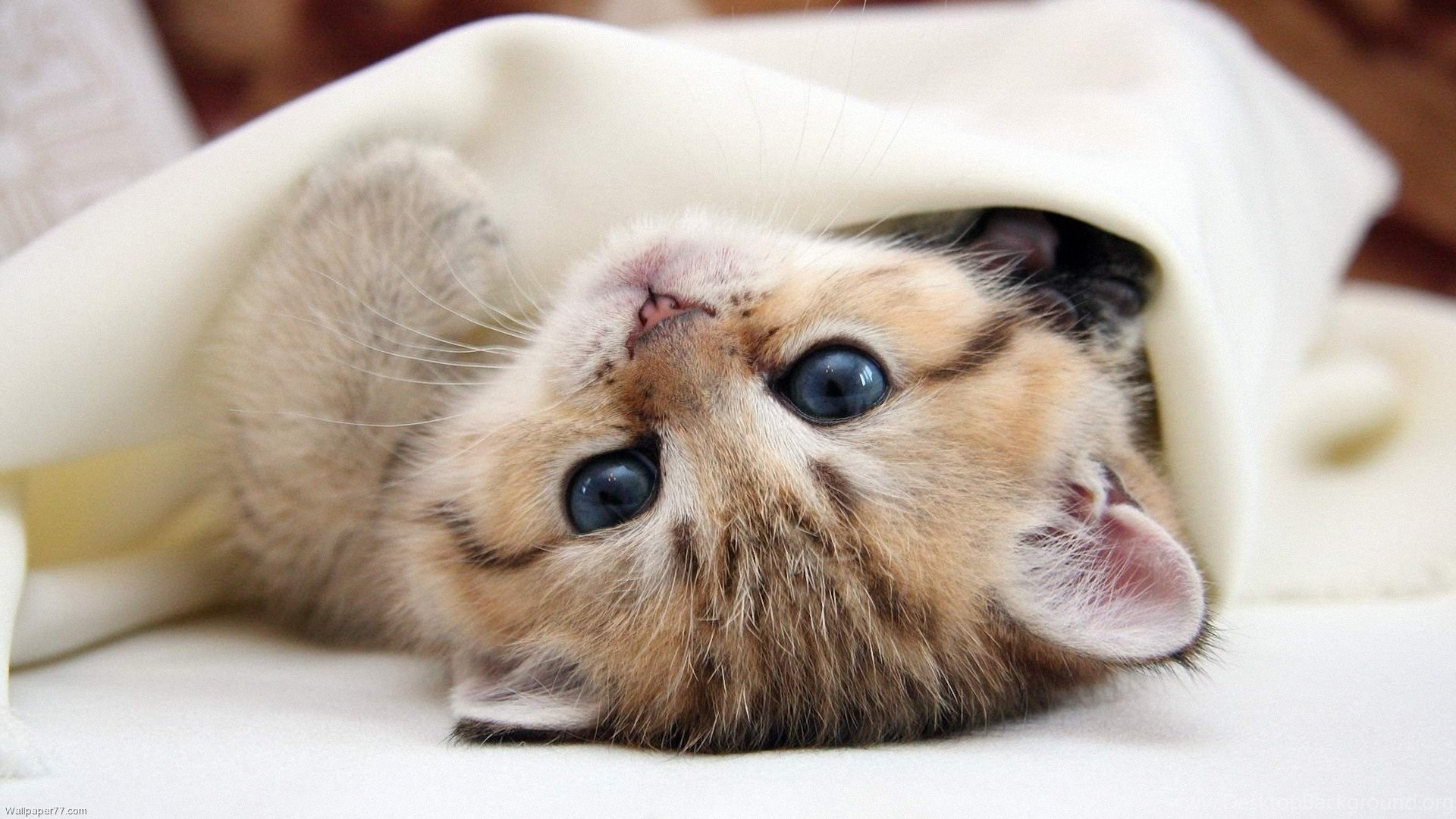High Resolution Cute Baby Animal Kitty Cat Wallpapers Hd 17 Full Desktop Background
