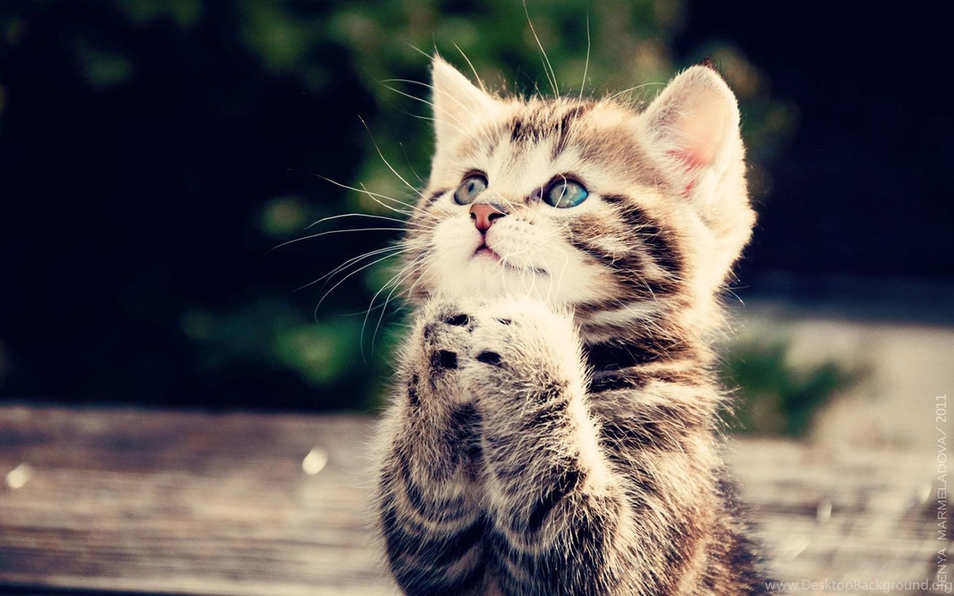 cute baby cats wallpapers for iphone : animal wallpapers rakaruan