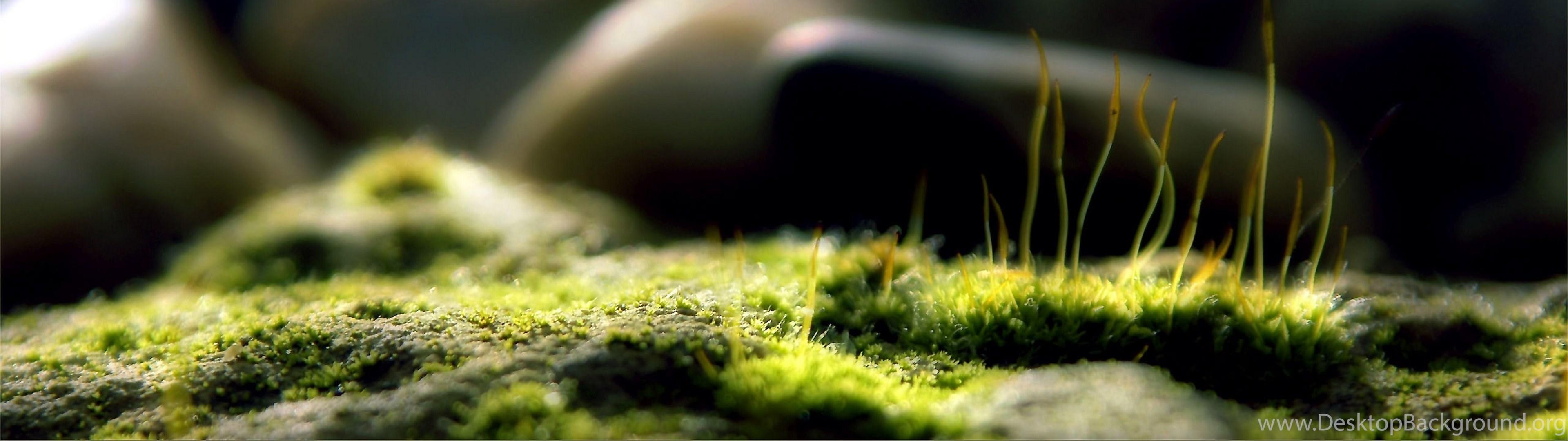 Download Wallpapers 3840x1080 Grass Macro Depth Of Field