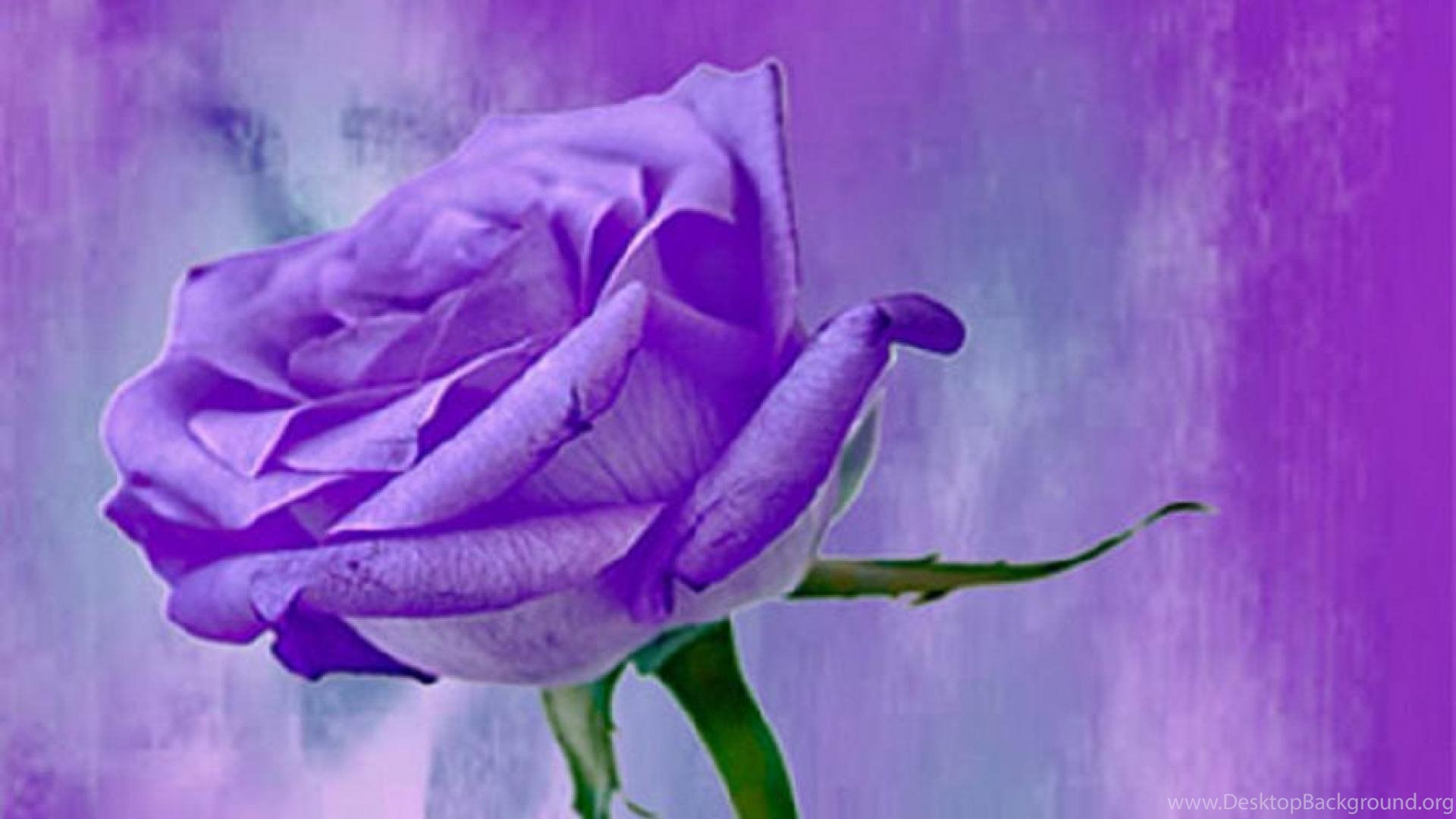 PURPLE ROSE WALLPAPER Desktop Background