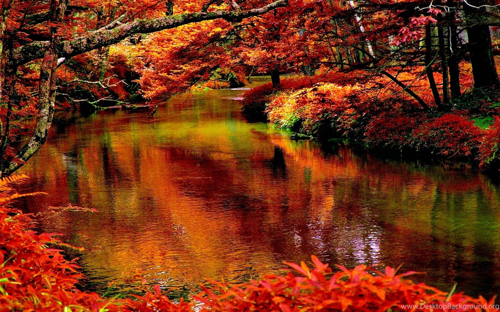 623622 rivers river autumn scene forest trees free desktop wallpapers