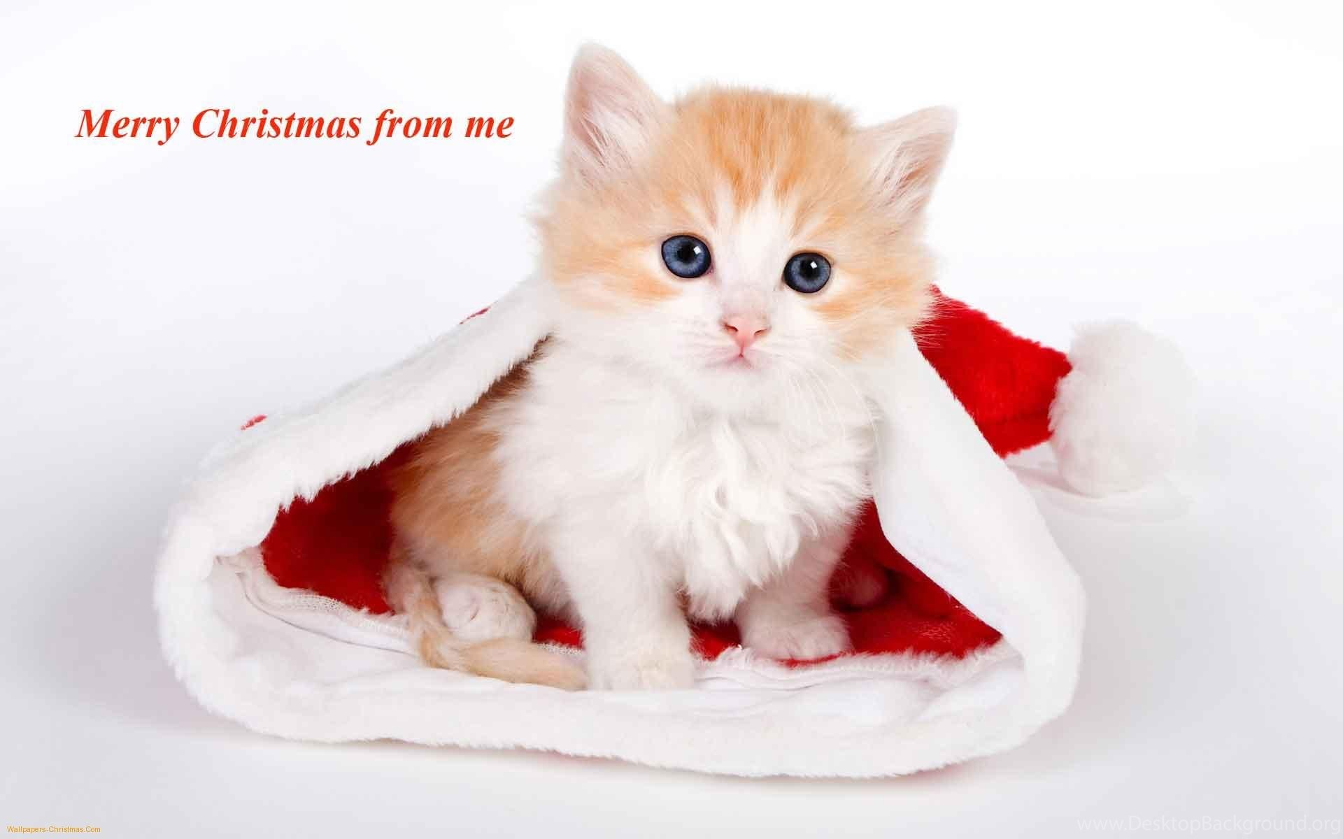 merry christmas 2015 collection of xmas puppies and kittens desktop