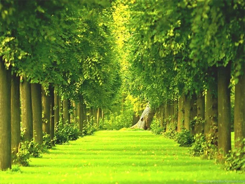 Gardens Wallpaper Green Garden Hd Wallpapers Free Choice Wallpapers