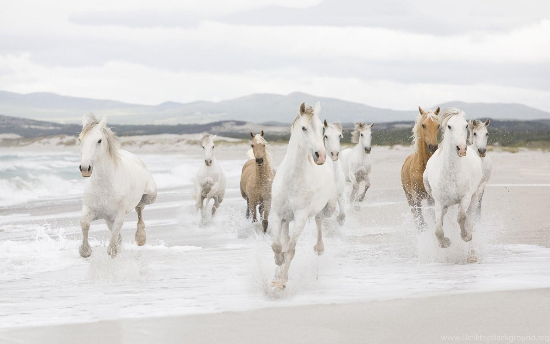 Seven White Running Horses Wallpapers WeSharePics Desktop Background