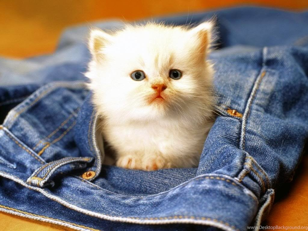 Cute Baby Animals Wallpapers Download Wallpapers Of Cute Animals Desktop Background