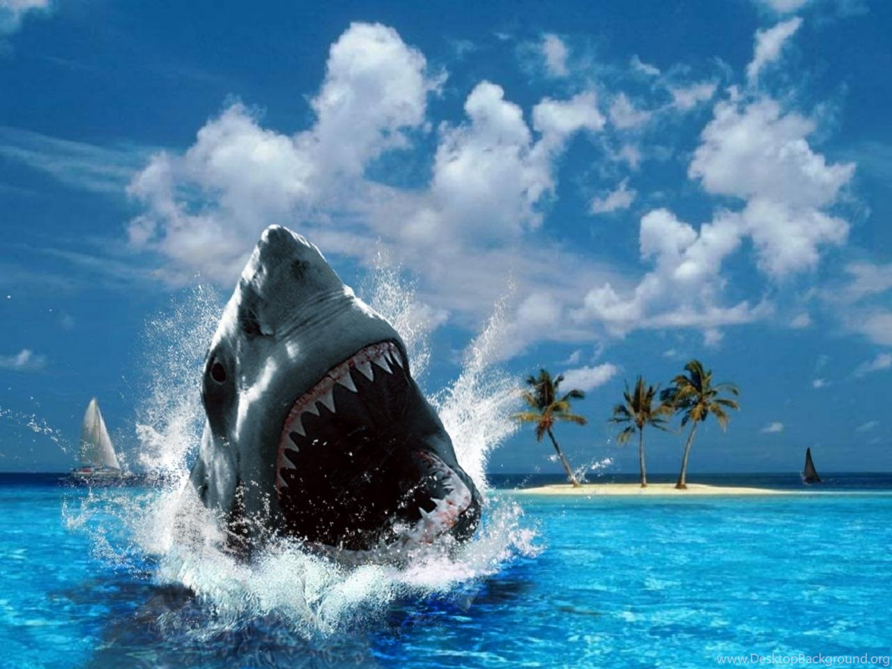 Shark Attack Wallpaper Hd Animalcarecollegeinfo