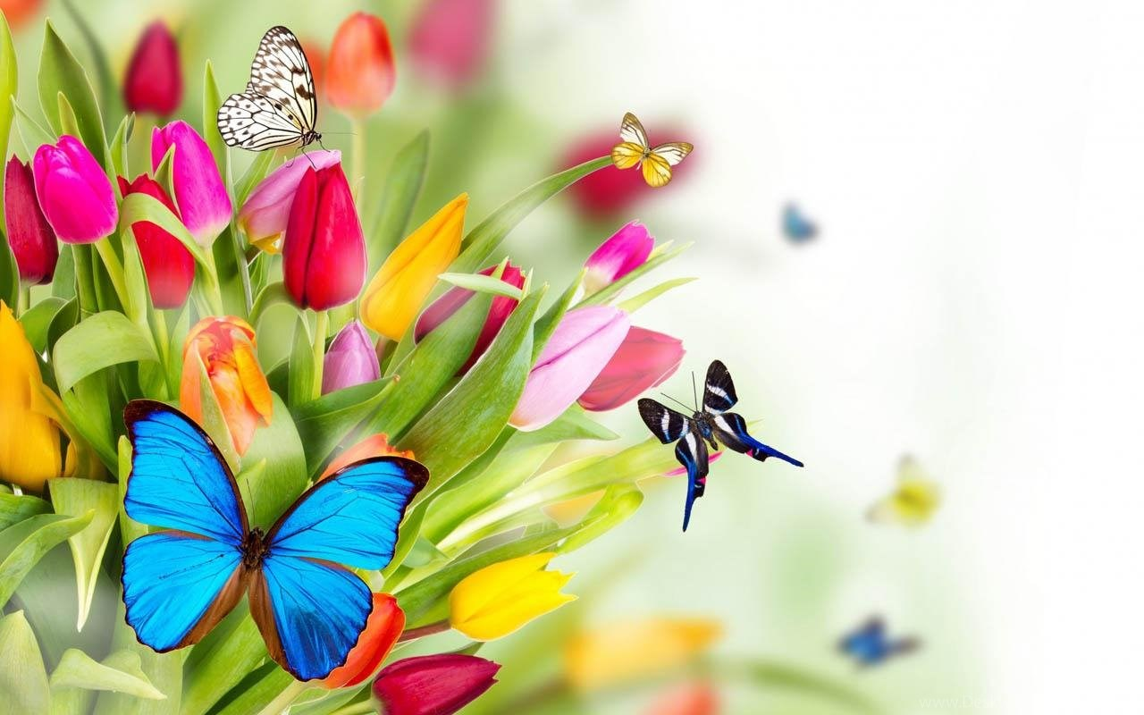 Spring Flower Wallpapers Android Apps On Google Play Desktop Background
