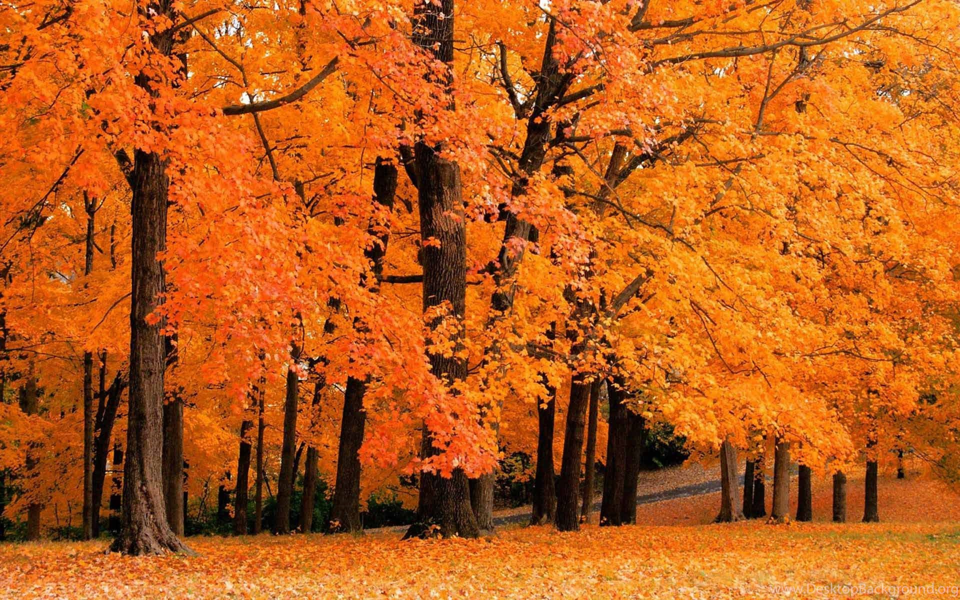 fall foliage wallpapers hd wallpapers pretty desktop background