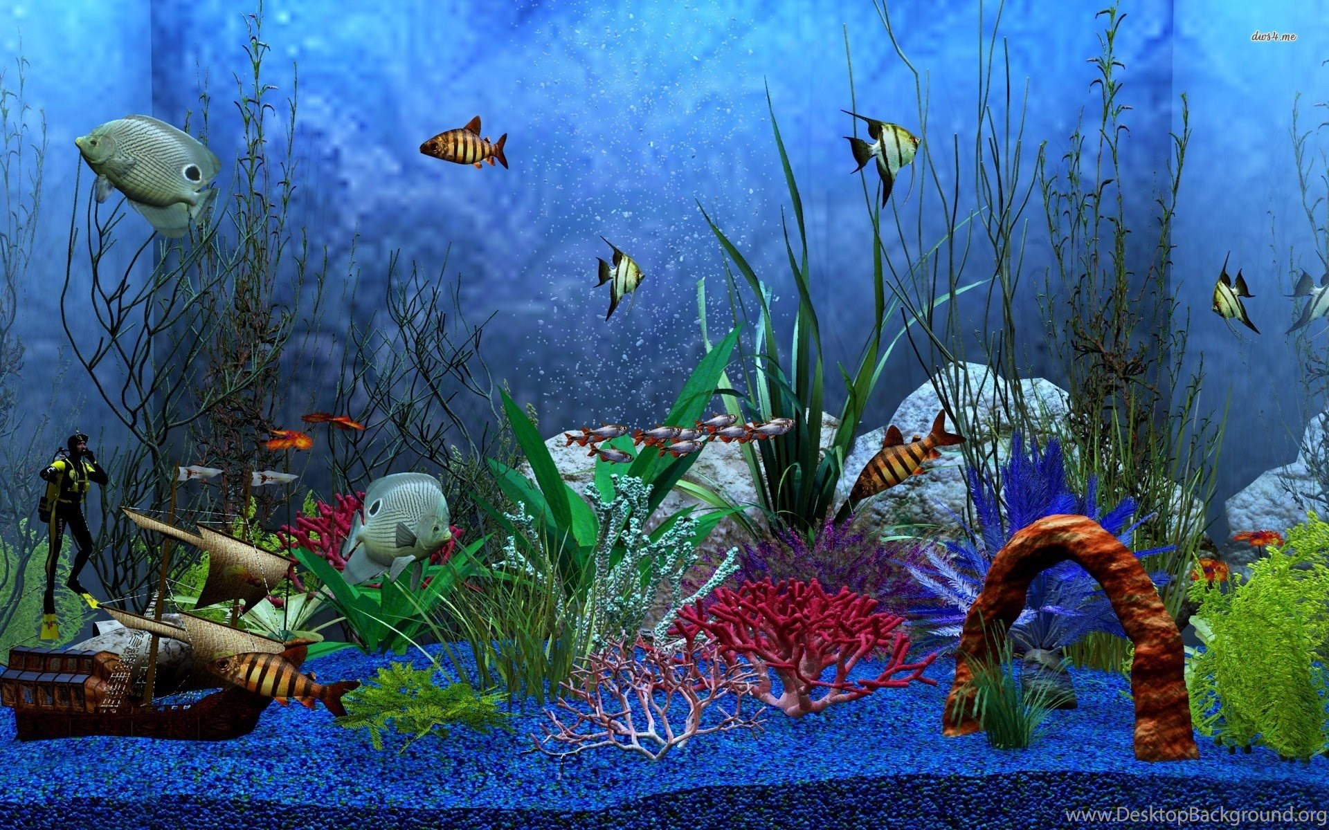hd aquarium fish tank computer wallpapers full size  desktop