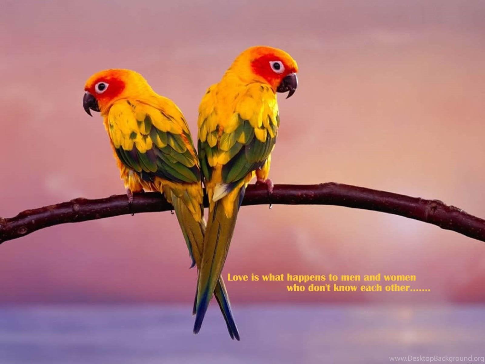 Hd Love Birds Images Wallpapers Desktop Background