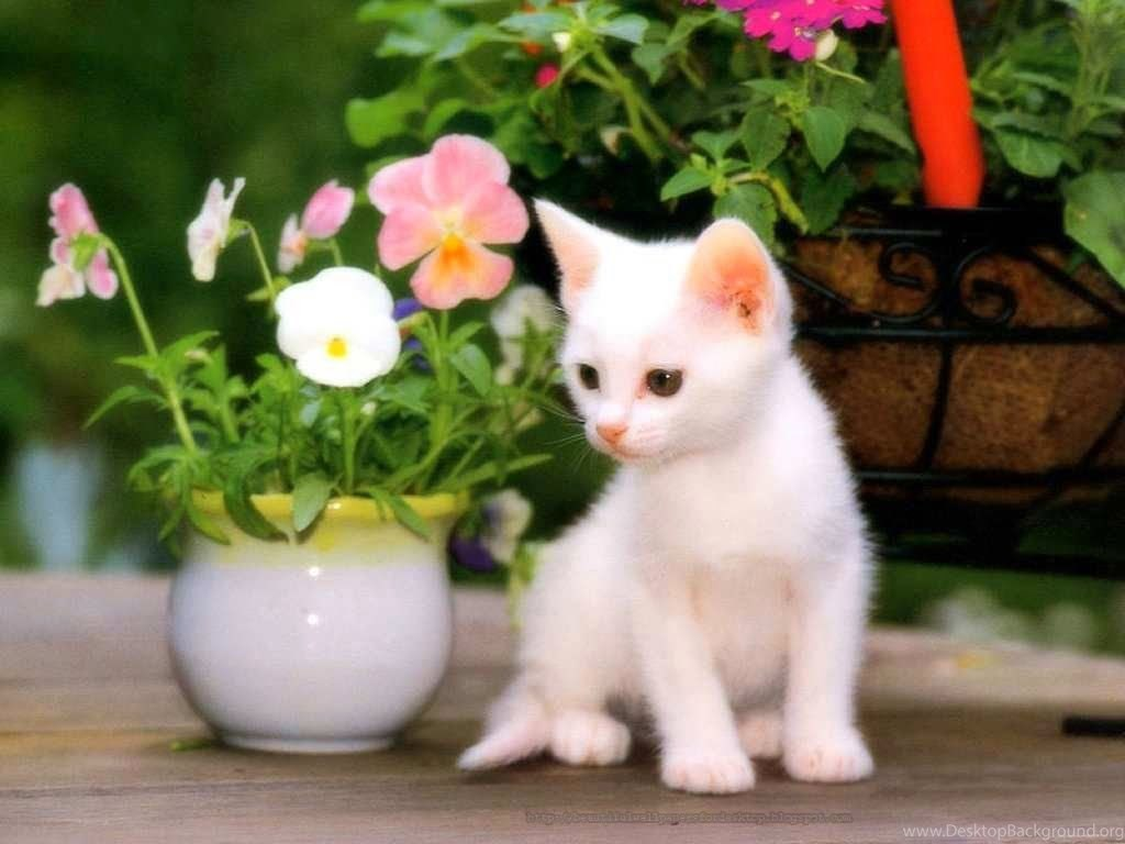 Cute Cats Wallpapers Free Download 1024x768 High Definition Desktop Background