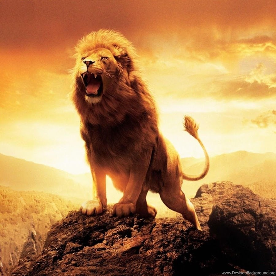 Lion Live Wallpapers Android Apps On Google Play Desktop