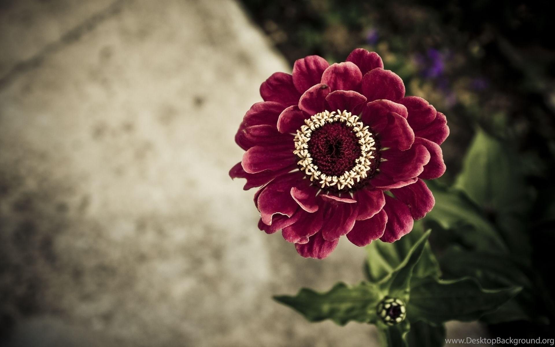 Most beautiful flowers images download desktop background original size 196kb izmirmasajfo