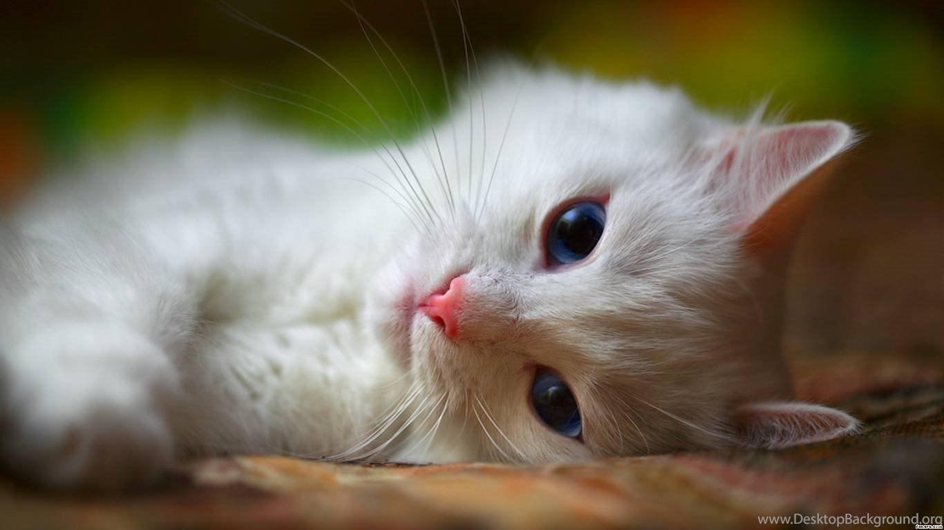 Cute Cat Sleeping Wallpapers For Laptops 7110 Amazing Wallpaperz Desktop Background