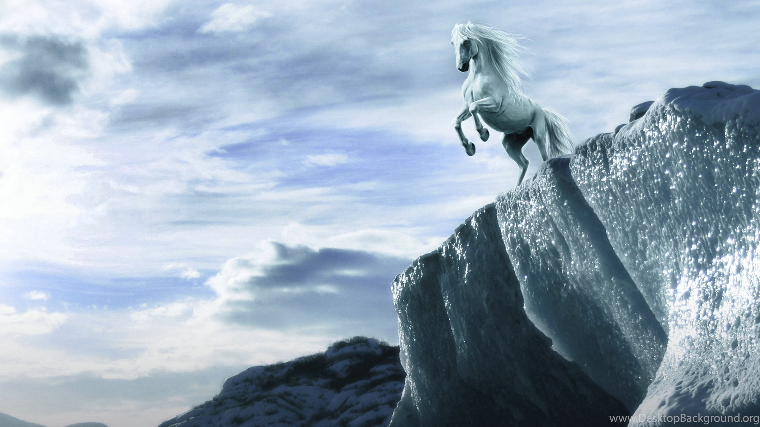 Animal Wallpaper White Horse Wallpapers Hd Hd Backgrounds