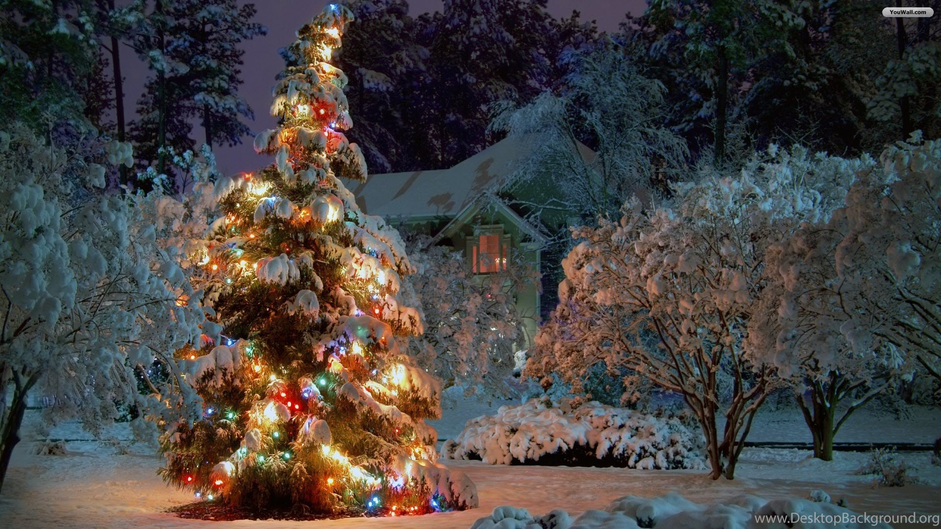 691203 youwall winter christmas tree wallpapers wallpaper