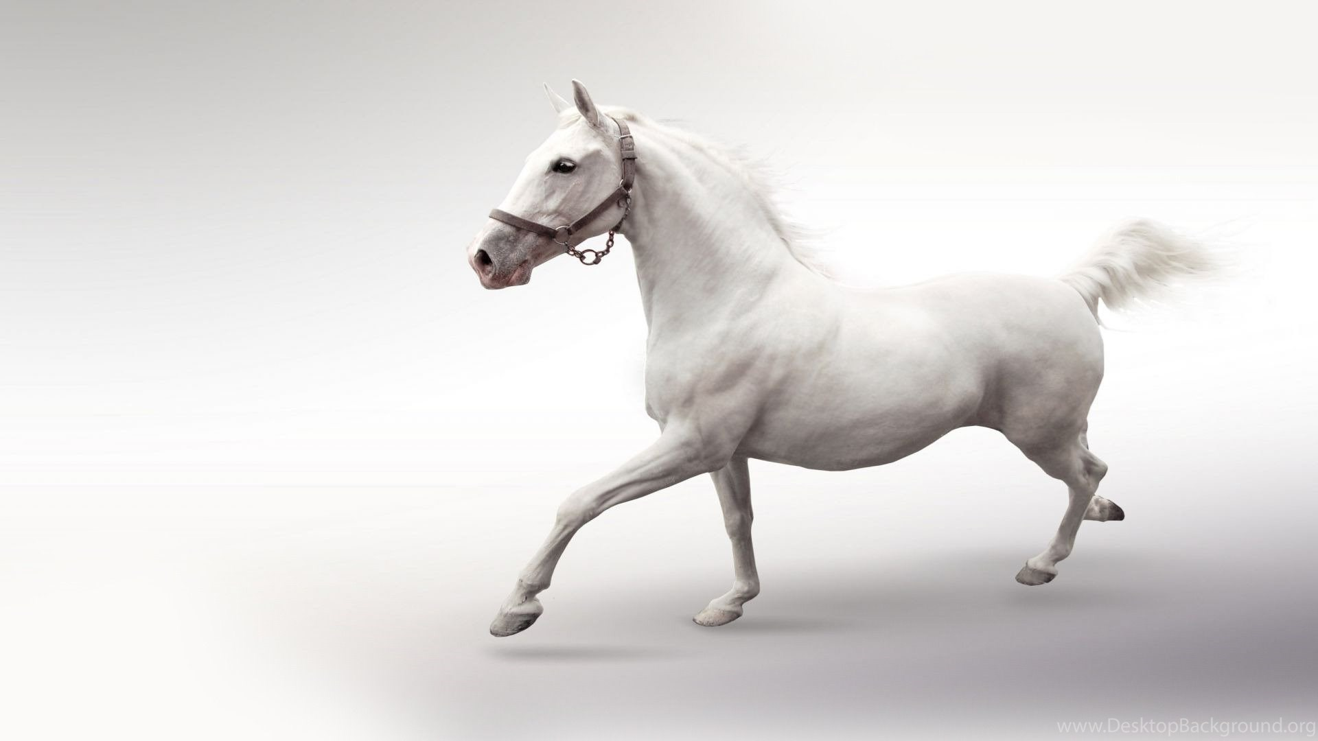 High Resolution Beautiful Animal Running White Horse Wallpapers Hd Desktop Background
