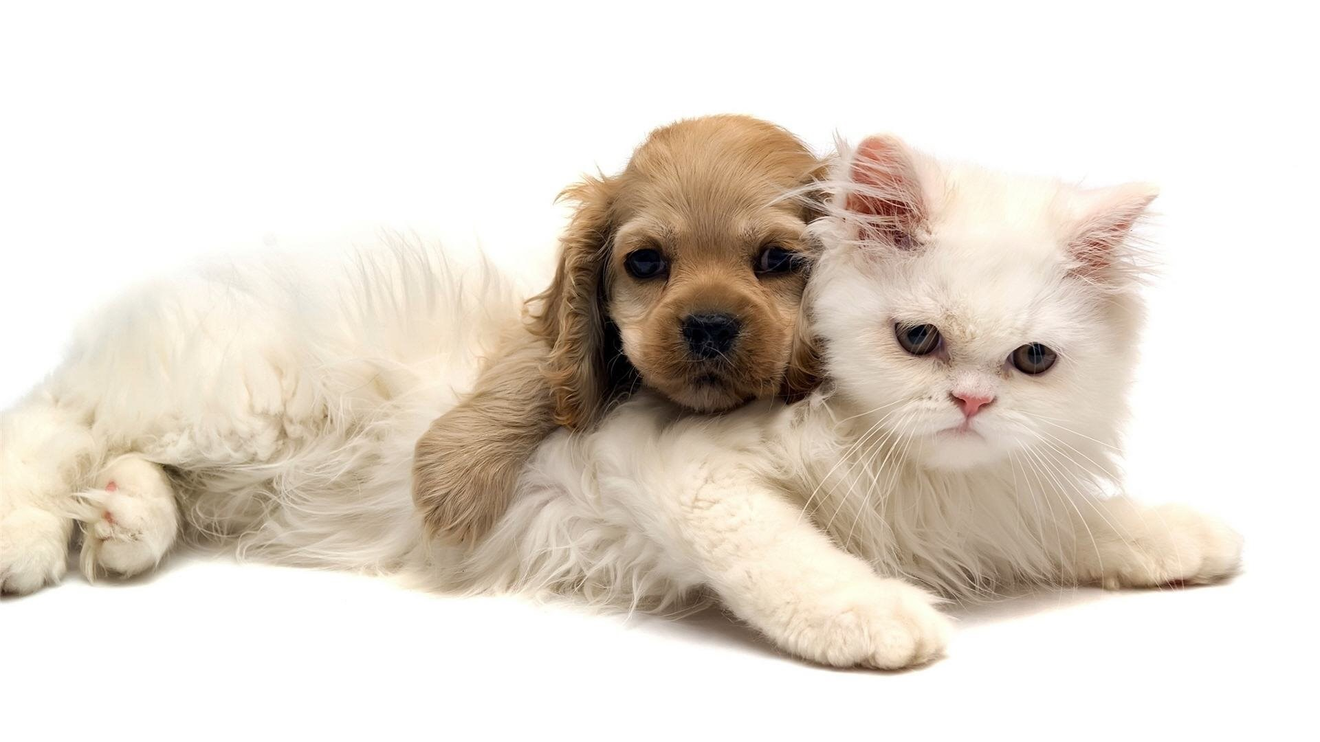Download Free Cat And Dog Wallpapers For Mobile The Quotes Land Desktop Background