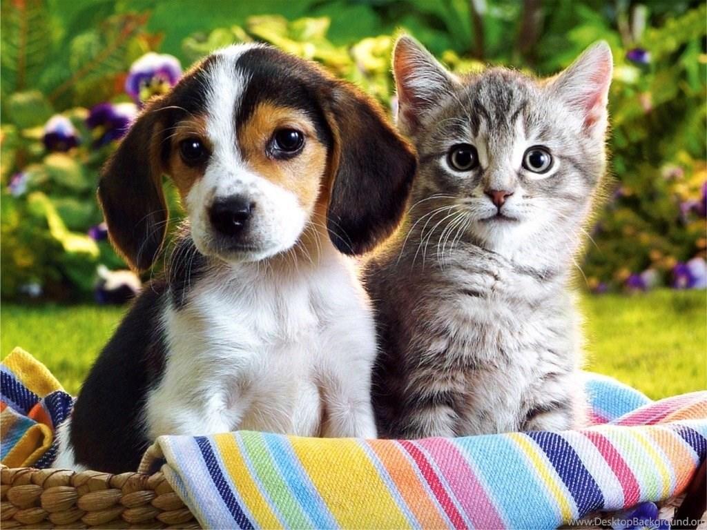 Hd cute puppies and kittens wallpapers desktop background - Cute kittens hd wallpaper free download ...