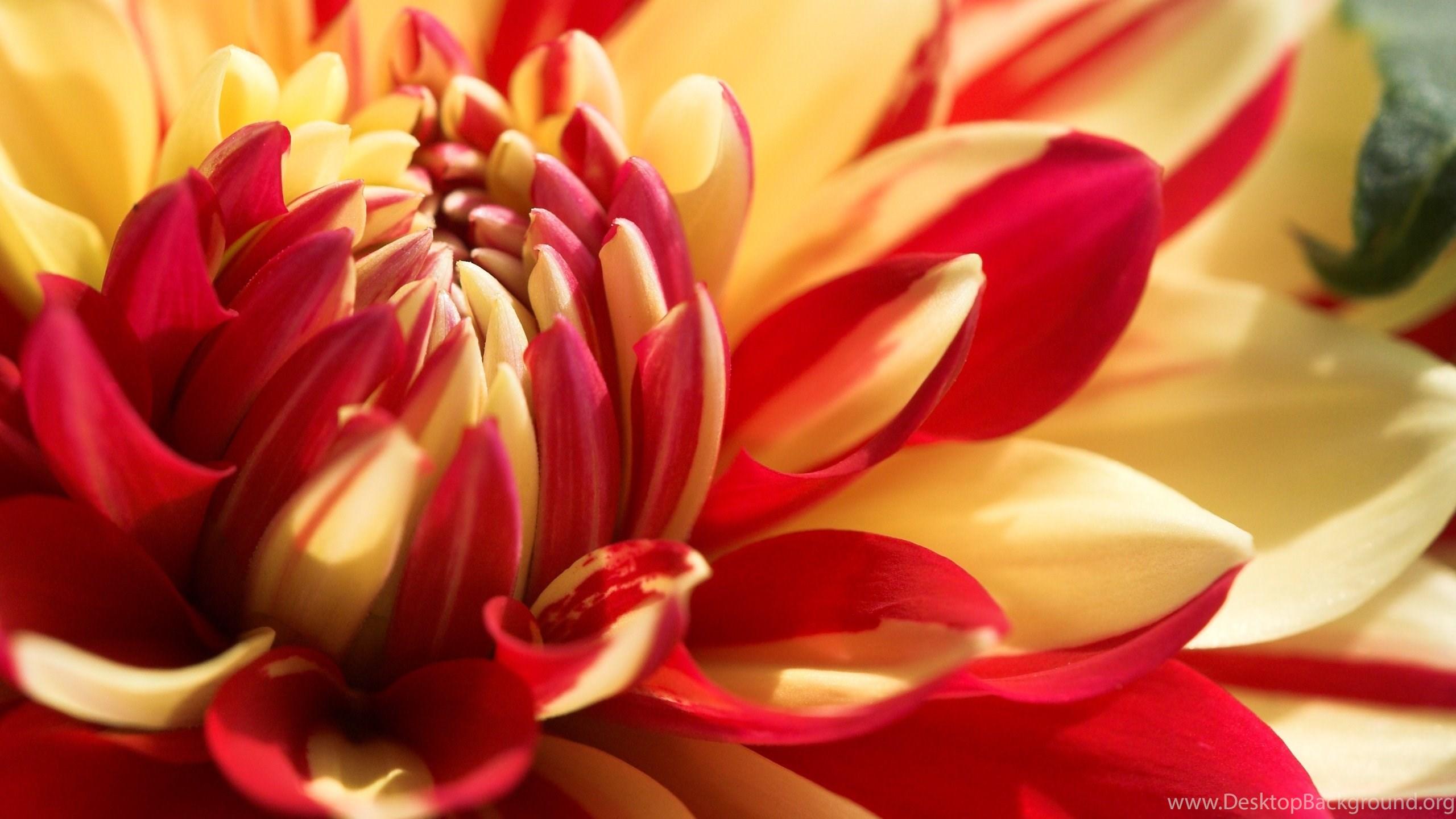 Download beautiful flowers wallpapers hd wallpapers desktop netbook izmirmasajfo