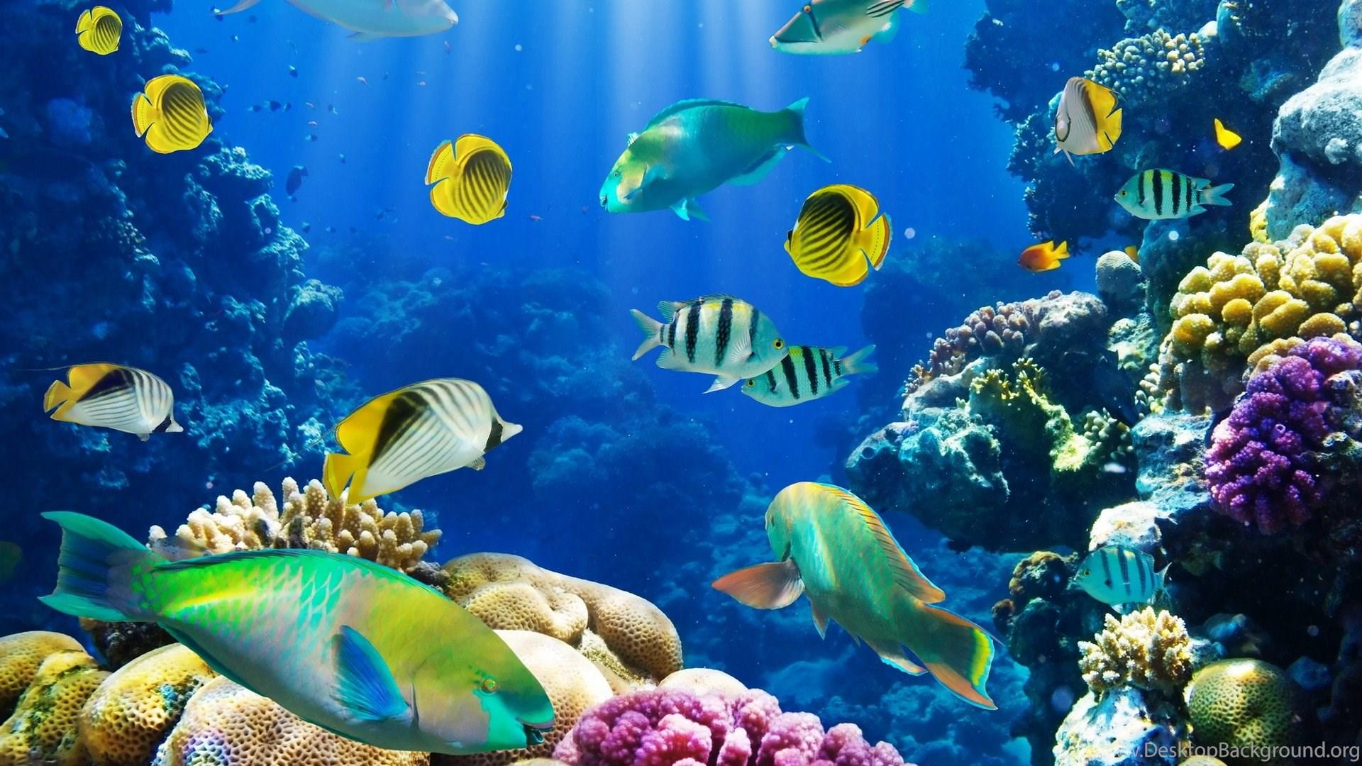 Wallpaper aquarium for pc
