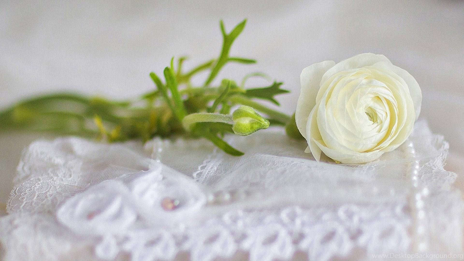 Beautiful White Roses Basket Wallpapers Rose Flower Images Rose