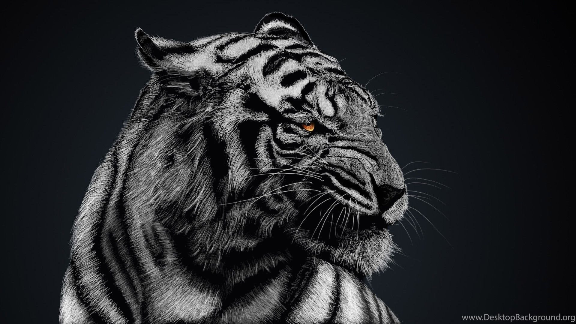 Wonderful Wallpaper High Quality Tiger - 705266_black-and-white-tiger-wallpapers-high-quality-animal-wallpapers_1920x1080_h  Gallery_545458.jpg