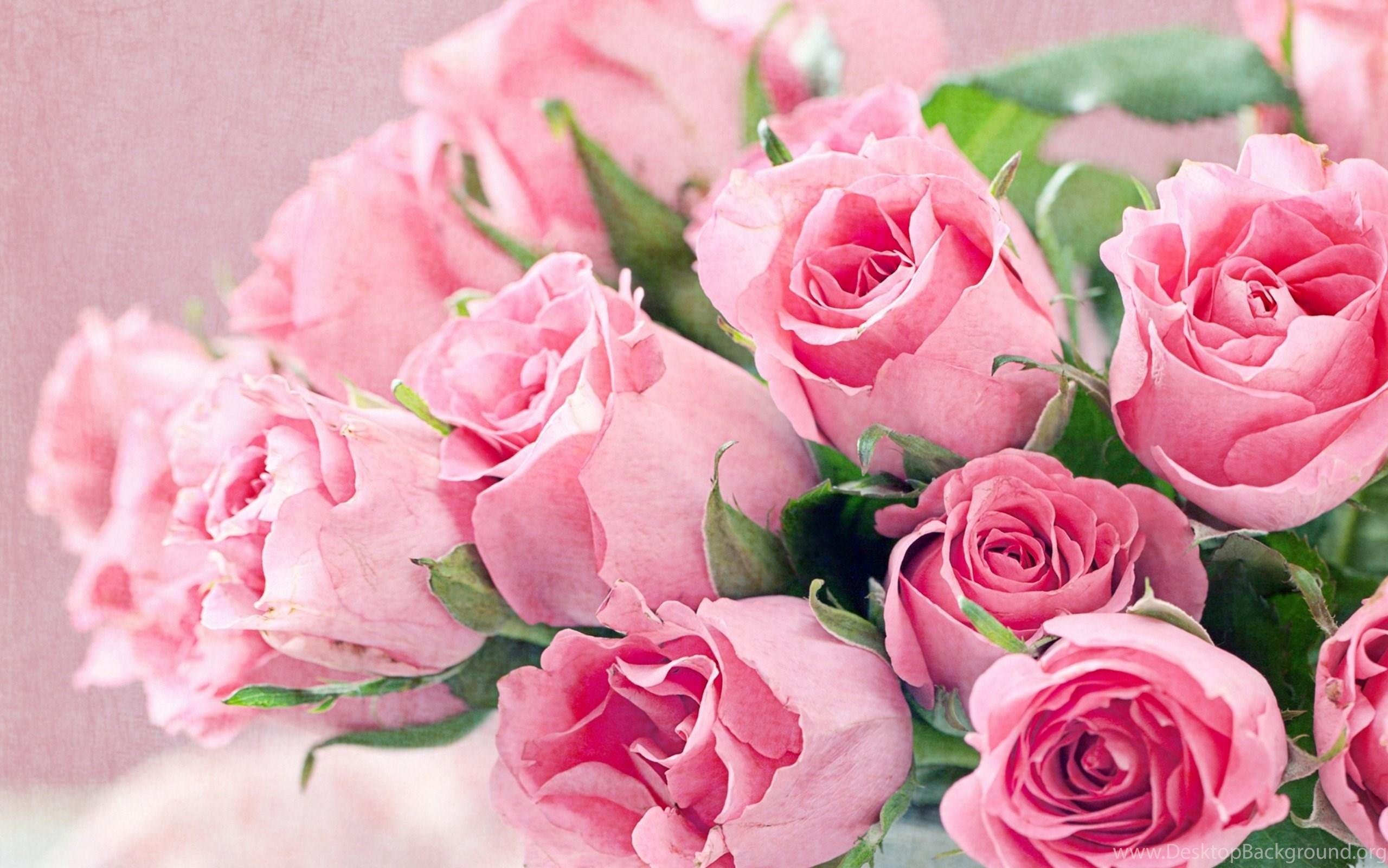 Roses pink flowers wallpapers free download of pink roses desktop widescreen mightylinksfo
