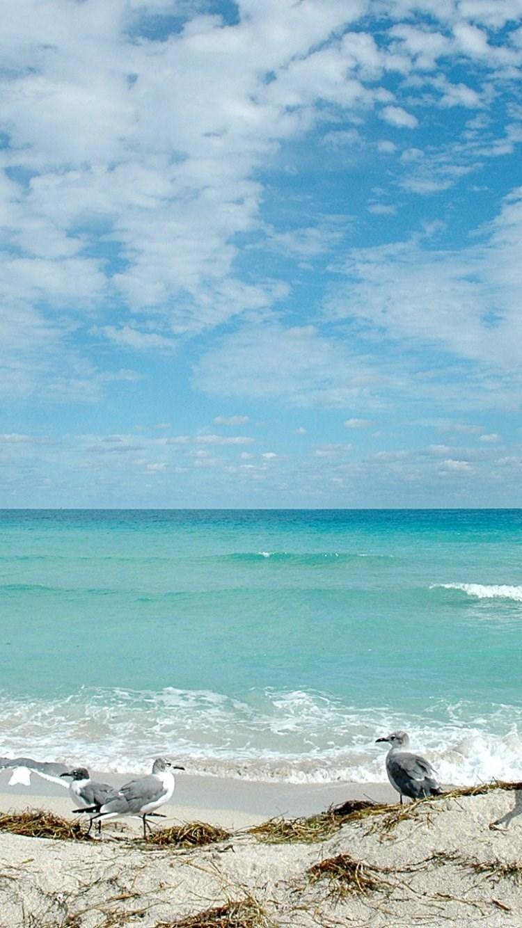 Florida Beach IPhone 6 Wallpapers 20653 Desktop Background