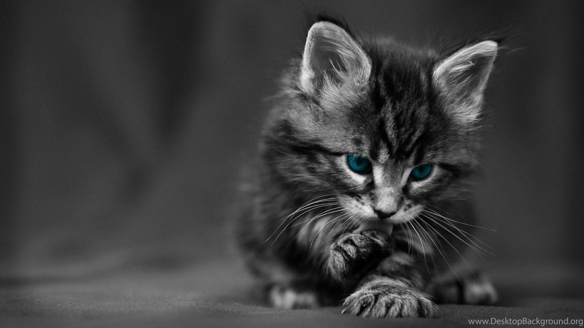 727099 cute black cat hd desktop wallpapers hd desktop wallpaper