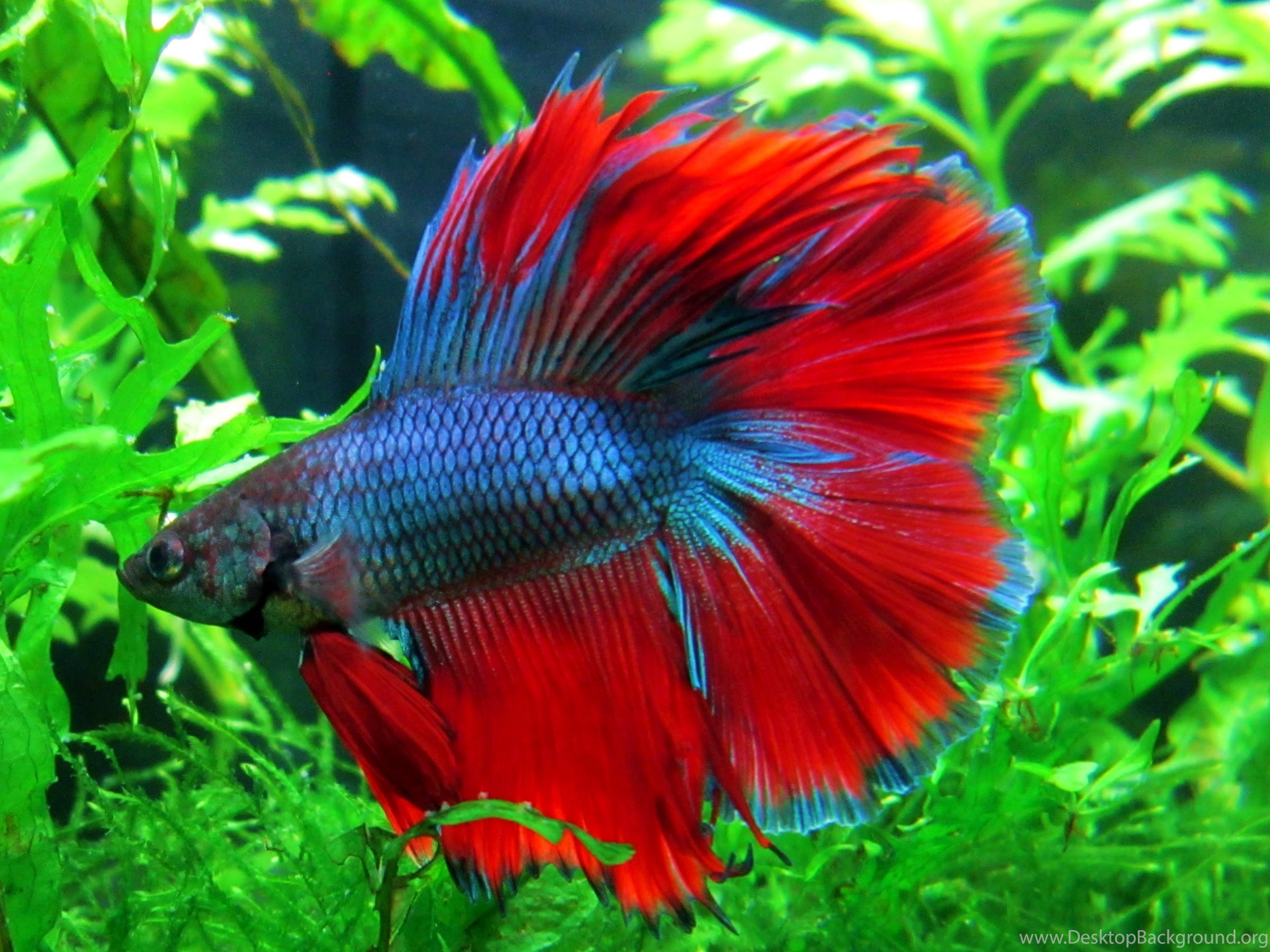 Colorful Fish Wallpapers Wallpapers