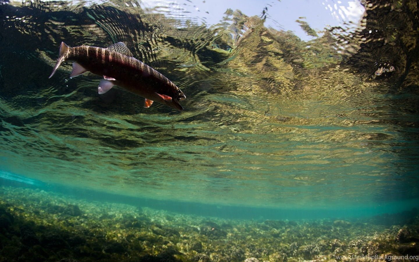 Awesome Fly Fishing Wallpapers Desktop Background