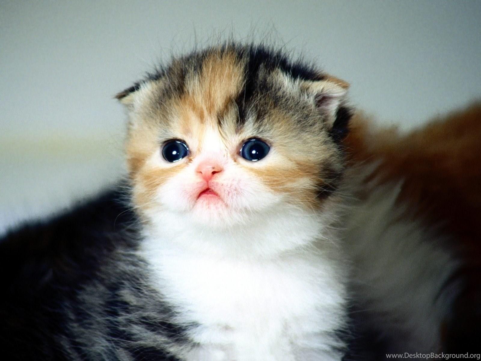 732101 cute cat wallpapers desktop free