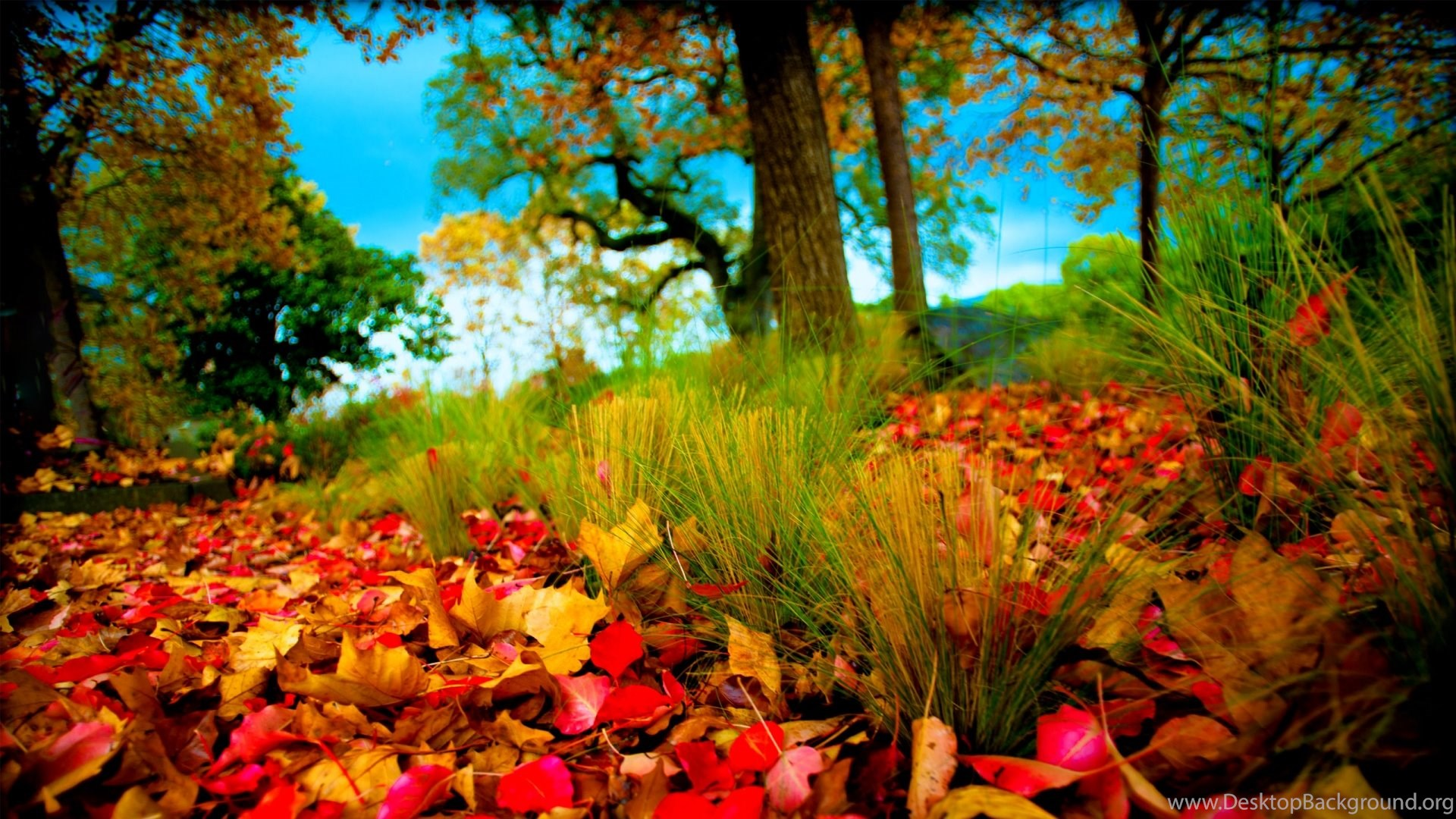 fall leaves images uhd wallpapers ultra high definition desktop