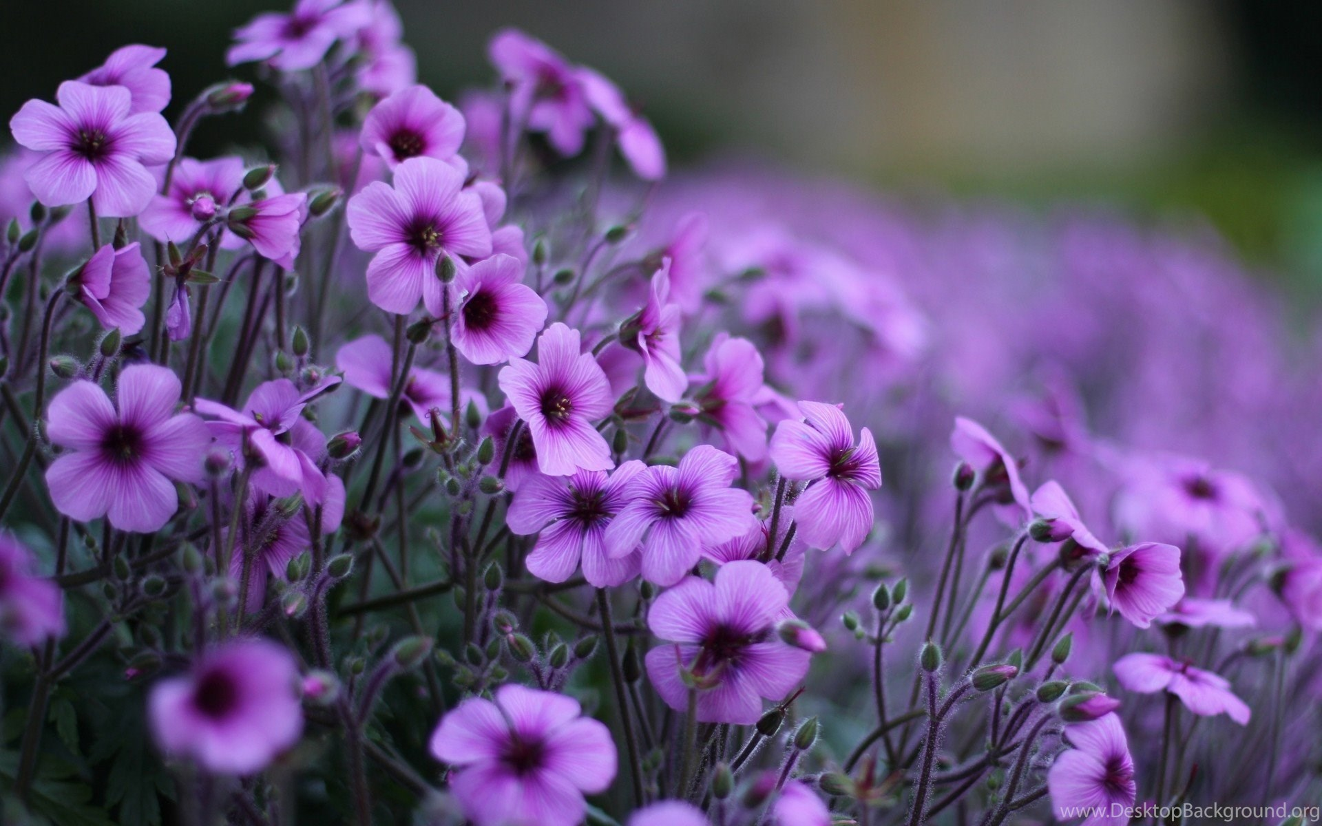 Beautiful purple flower wallpapers high quality flower wallpapers widescreen izmirmasajfo
