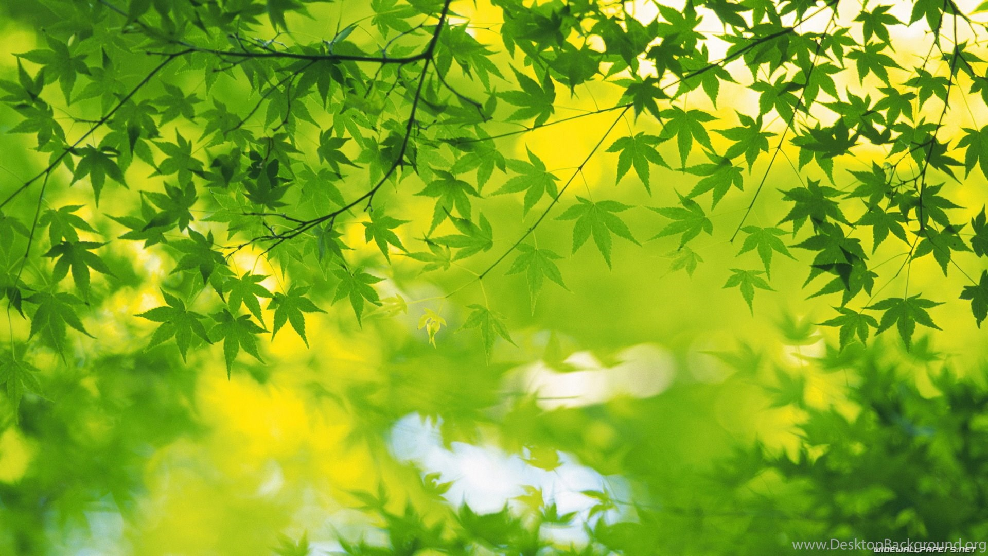 Wallpapers Green Leafs Wide And Hd Leaves Nature 1920x1080 Desktop Background