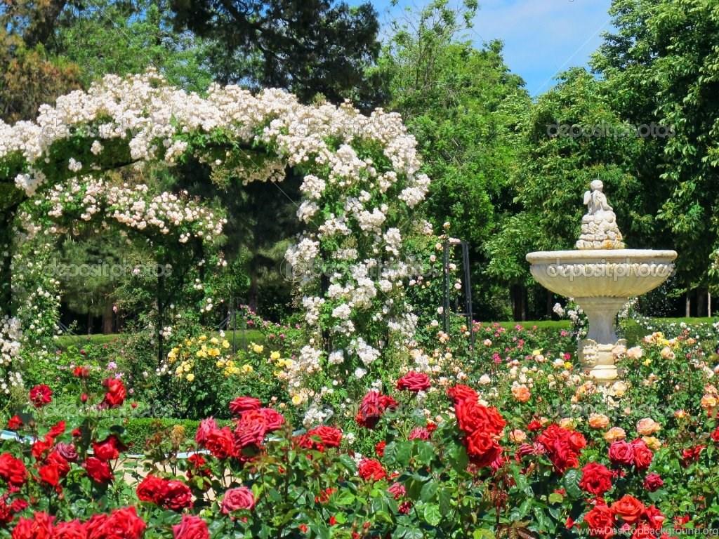 Gardens Wallpaper Beautiful Red Rose Best Widescreen Desktop Background