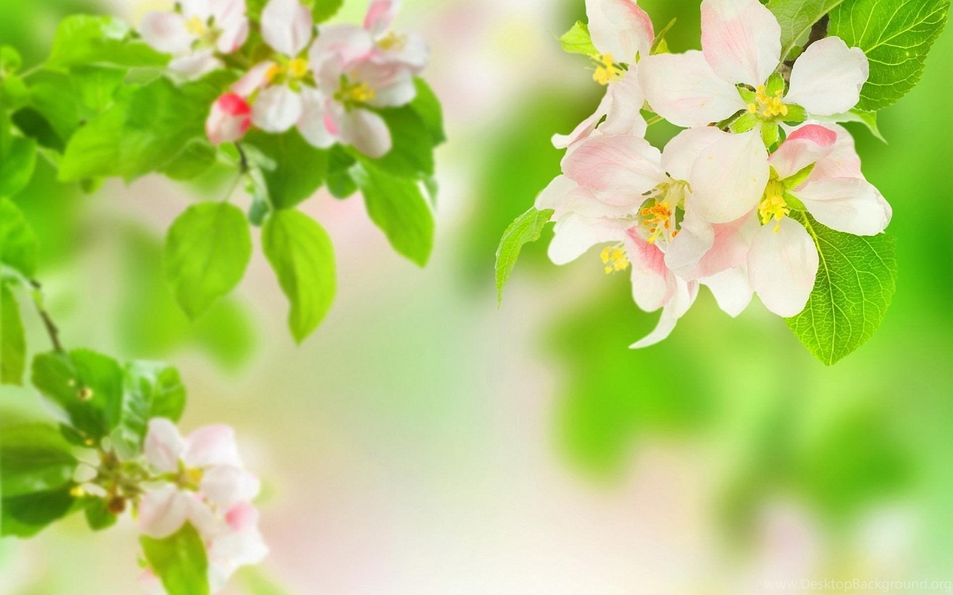 Flowers For Spring Flowers Backgrounds Desktop Background