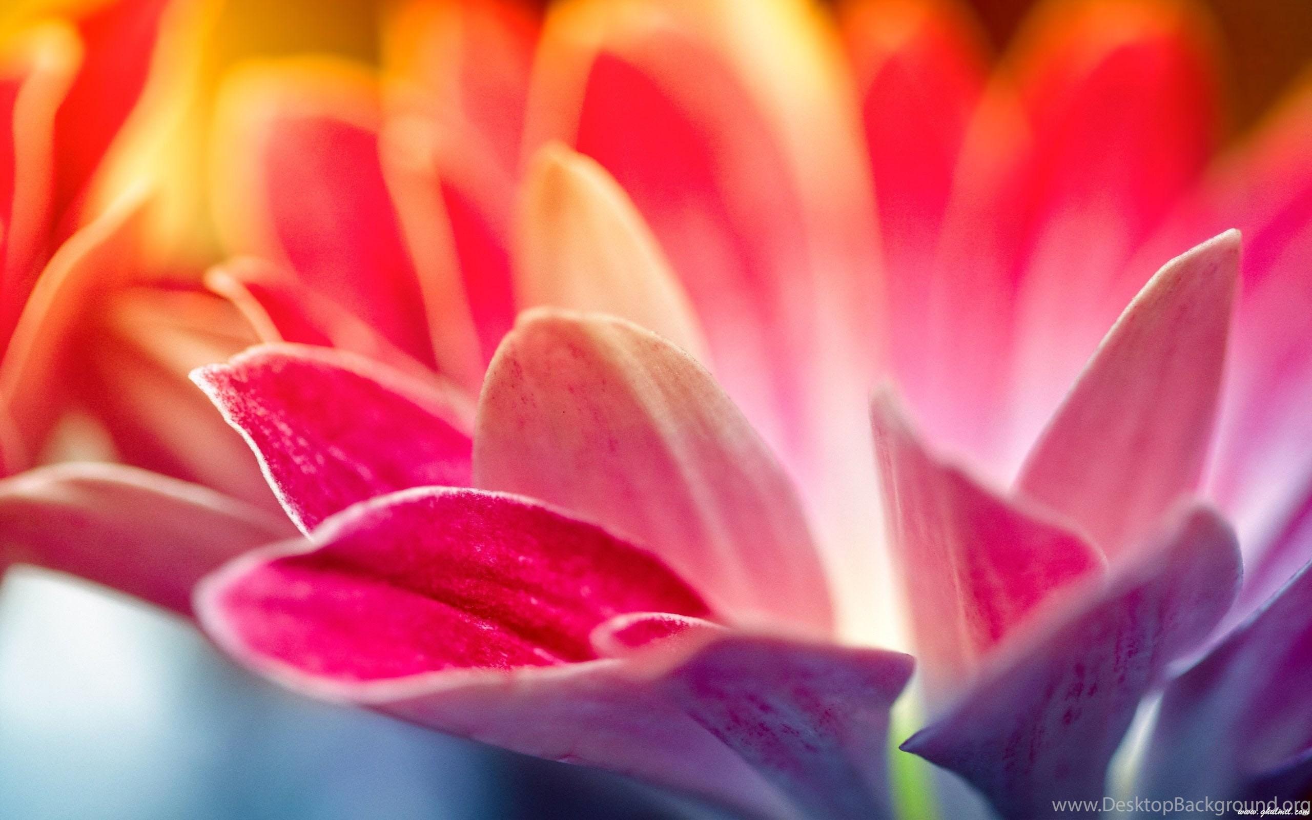 Beautiful Flowers Hd Wallpapers Flowers Photos For Desktop Desktop
