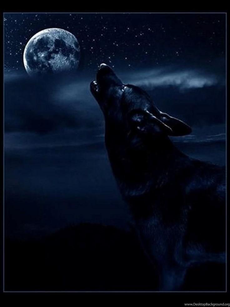 Dark Wolf Wallpapers Http Wallws 452915