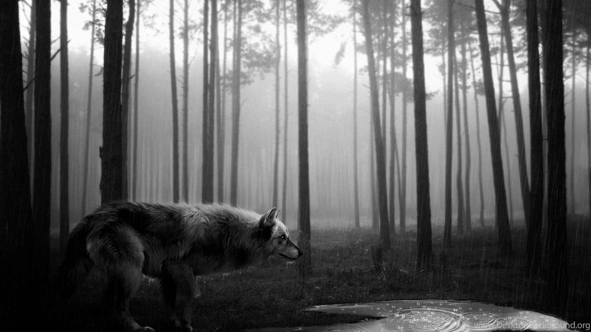 Creative Graphics Black And White Wild Wolf Wallpaper Black And