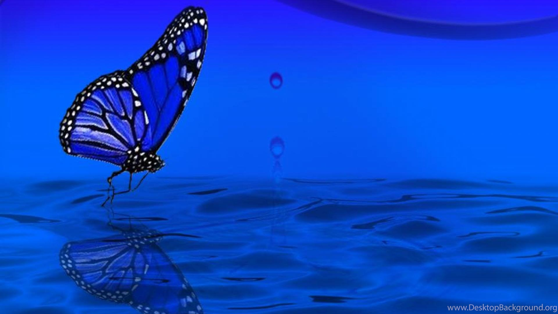 Blue Butterfly Wallpapers ( Desktop Background
