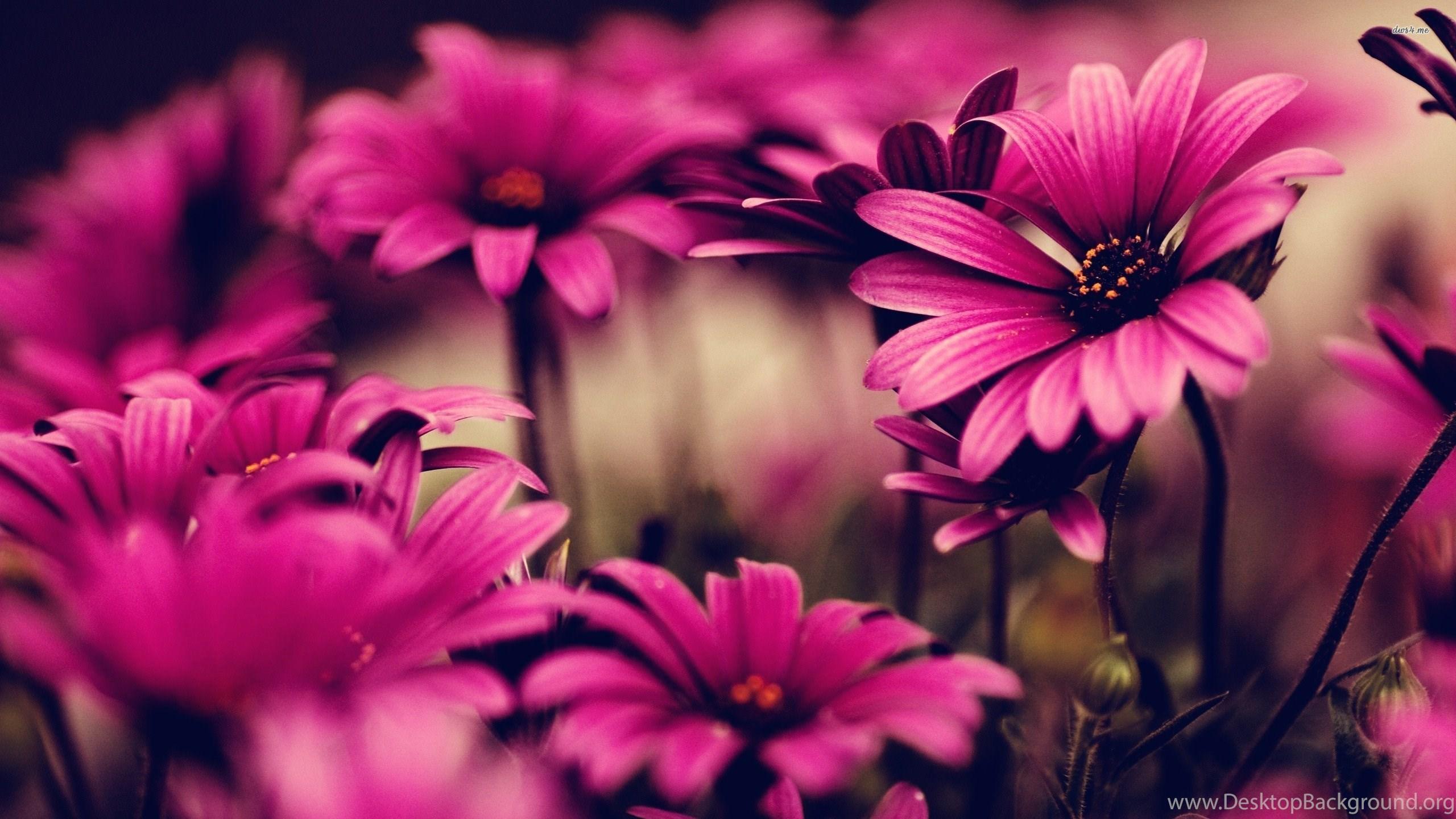 wallpapers godfather fb covers flowers fond ecran hd 2560x1440