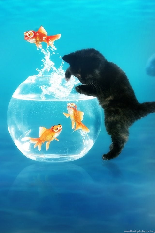 Cute Cat And Fish Ipod Touch Wallpapers Free 640x960 Hd Apple Desktop Background