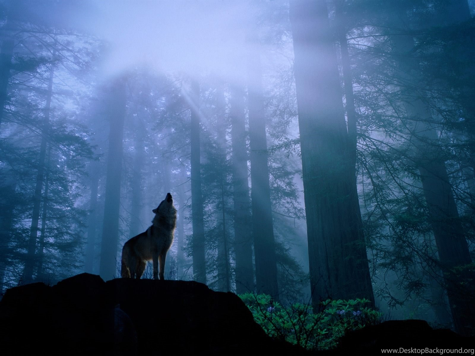 772742 hd desktop wallpapers wolf 3d hd