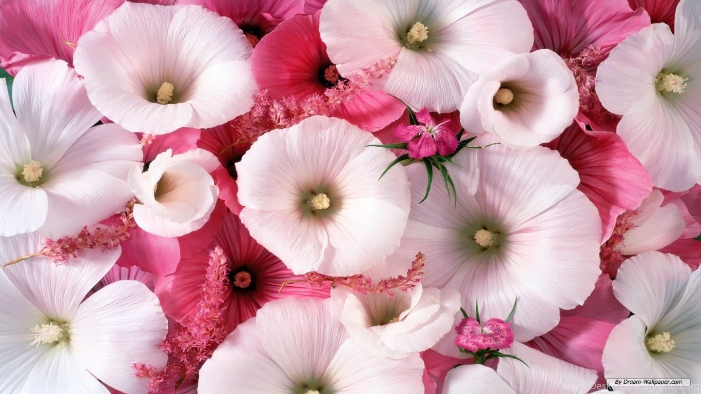 Download beautiful flowers wallpapers hd wallpapers desktop popular izmirmasajfo