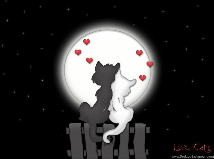 Cool Love Cats Hd Wallpapers Desktop Background